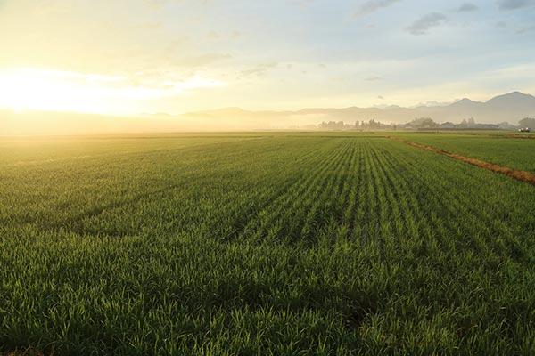 未来の農業はオゾン水でより安全に