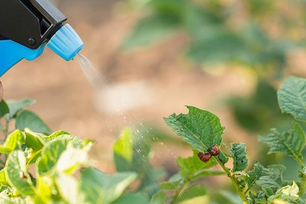 農薬代わりに使えるオゾン水