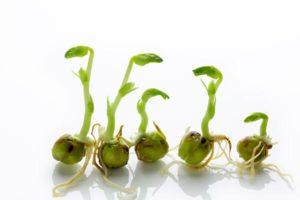 種子の殻を軟化させる