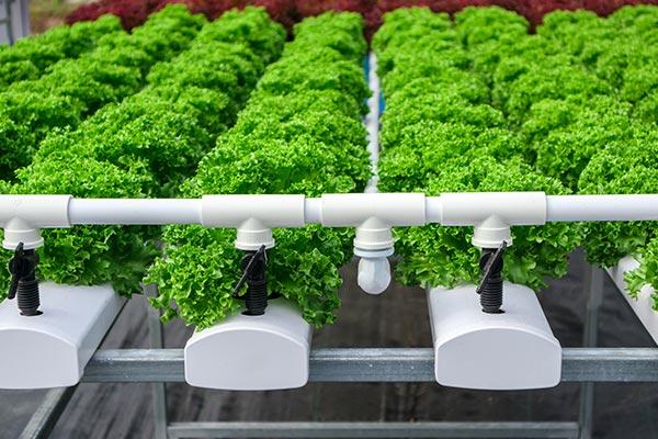 土壌栽培以外のオゾン水の活用