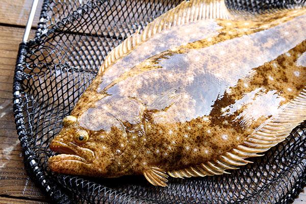 論文「オキシダント海水およびポビドンヨード剤がヒラメParalichthys olivaceus卵のふ化率に及ぼす影響」を超平易に解説