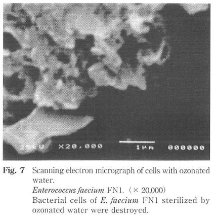 オゾン水による細菌の崩壊現象