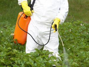 オゾン水で作る安全・安心な農作物