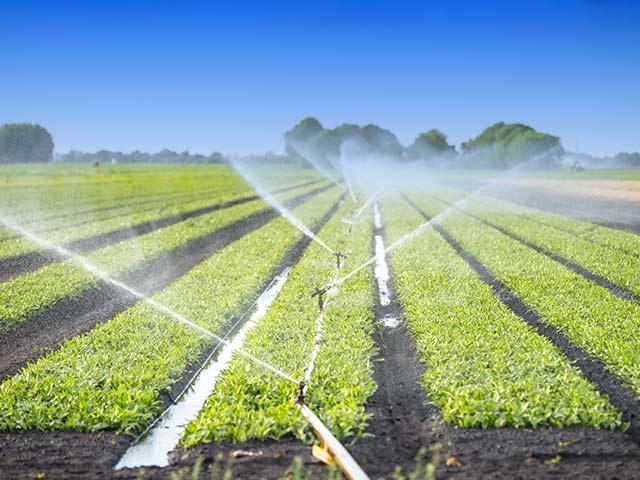 農業でオゾン水が用いられる場面