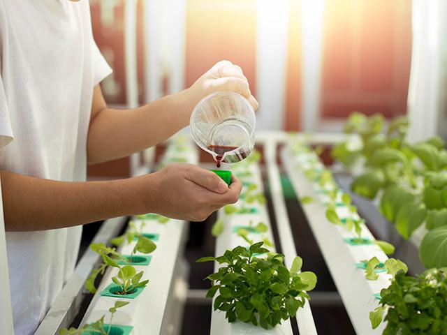 オゾン水を活用した養液栽培