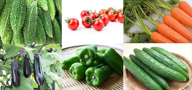 これらの野菜で試してみた
