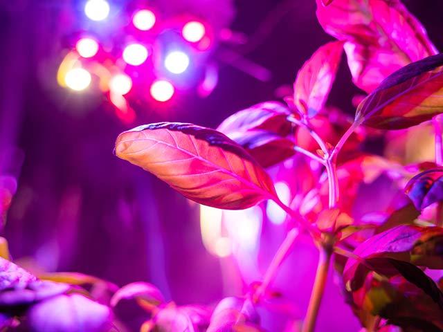 紫外線の殺菌法と効果