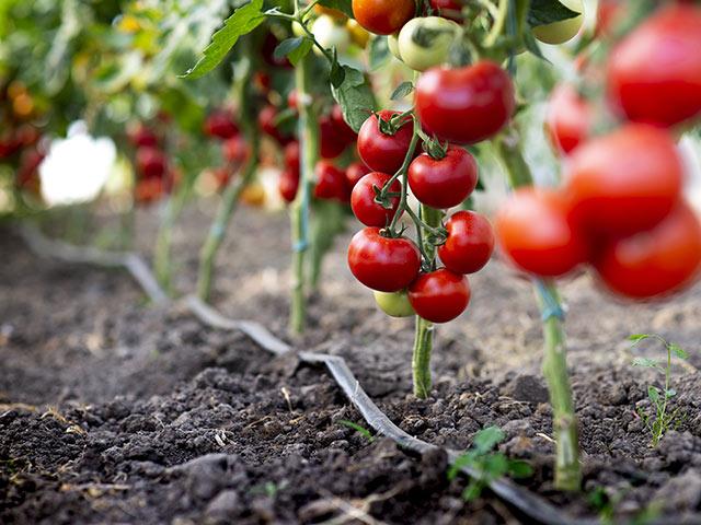 論文「オゾンガスを利用した土壌消毒が土壌の化学性および作物の生育に及ぼす影響」を超平易に解説