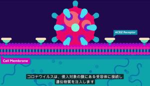 新型コロナウイルスとパンデミックについて世界一わかりやすい動画