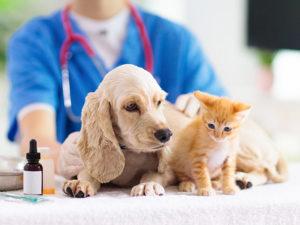 ペットショップから飼い主に教えてあげて【犬猫のコロナ感染の真実】